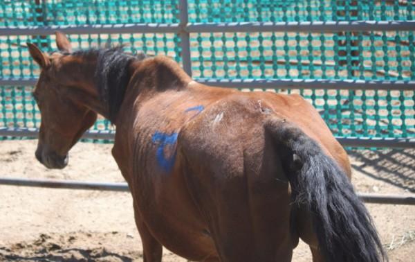 http://suscaballos.com/Dolor de dorso en el caballo