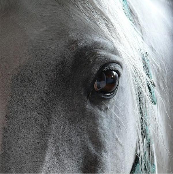 http://www.suscaballos.com/Problemas Hepáticos en los caballos