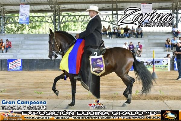 http://suscaballos.com/SE VENDE YEGUA TROCHADORA GALOPERA