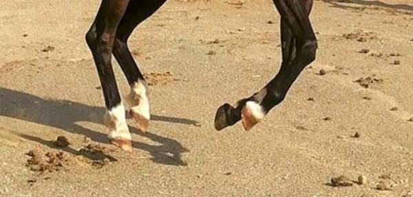 https://suscaballos.com/La nutrición y sus consecuencias en el casco del caballo: más allá de la biotina