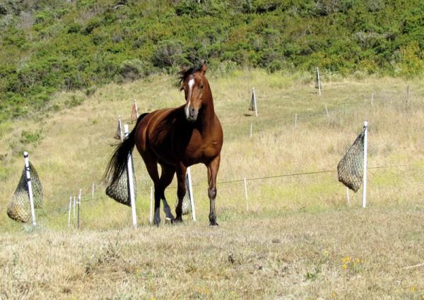 https://suscaballos.com/Paddock Paradise, un concepto natural para la estabulación de caballos